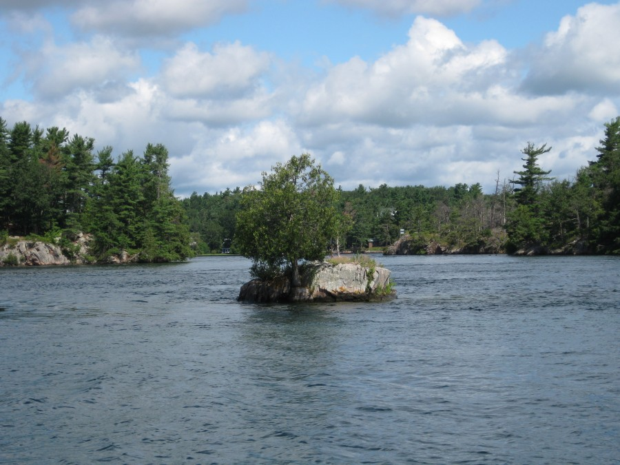Tree growing on large rock in middle of water
